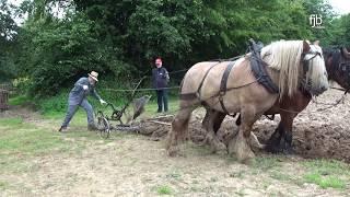 Download Ein starkes Gespann - Gespannpflügen - Plowing with Horses Video