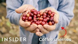 Download How Brazil Makes Over A Third Of The World's Coffee Video