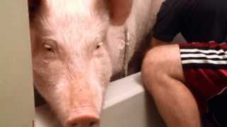 Download Bathtime with Esther the Wonder Pig Video