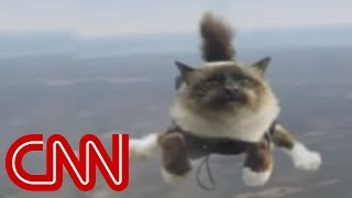 Download Skydiving cats cause uproar Video