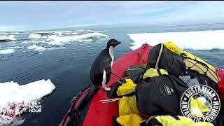 Download A curious penguin joins scientists for a cold-water cruise Video