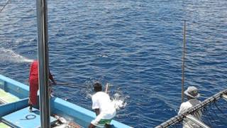 Download World biggest tuna catch اكبر اماكن صيد التونه في العالم Video