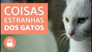 Download 10 coisas estranhas que os gatos fazem Video