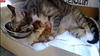 Download Tiny Kittens Eve Number 2 then snack Video