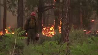 Download Understanding Fuels: Forest Fire Science Video