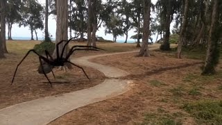 Download Monsters Attack - Giant Spiders & Dinosaurs Video