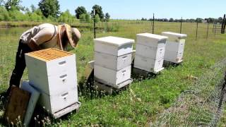 Download 1 TIP FOR BEE KEEPERS Video