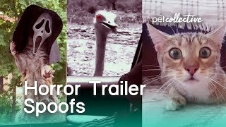 Download Horror Movie Trailer Spoofs | The Pet Collective Video