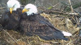 Download Decorah Eagles,Mom & Dad's Priceless Moment :) 6/30/17 Video