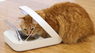 Download 10 USEFUL GADGETS FOR PETS Video