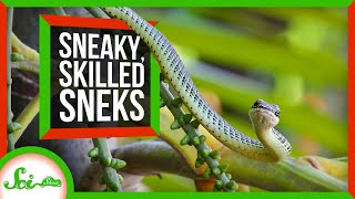 Download From Hognoses to Spider Tails: 6 Sublime Snakes Video