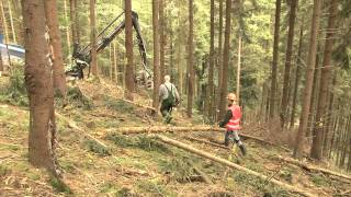 Download Köpfe und Karriere: Forstwirtschaft Video