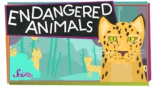 Download Endangered Animals! Video