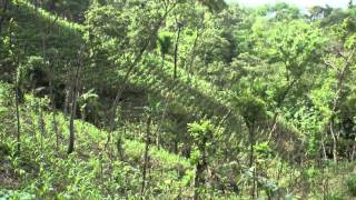Download Honduras Quesungual System Video