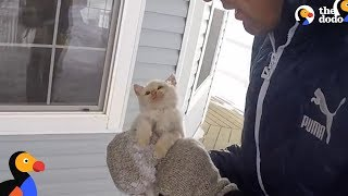 Download Kitten Frozen Solid Brought Back To Life by Family | The Dodo Video