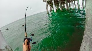 Download fishing in sketch nasty stuff - dont do this... catch and cook Video