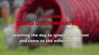 Download dog AGILITY EXERCISES with a TUNNEL-improving SPEED, FOCUS, TURNS and DISCRIMINATION Video