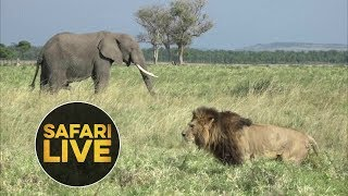 Download safariLIVE - Sunset Safari - July 30, 2018 Video