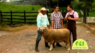 Download Escuela de campo: Razas y cruzamiento de ovinos - 30 de agosto Video