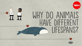 Download Why do animals have such different lifespans? - Joao Pedro de Magalhaes Video