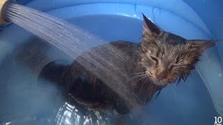 Download 5 Cat's Bath Time. 5匹の猫のお風呂♨️ Video