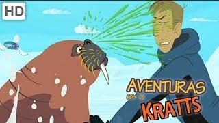 Download Aventuras con los Kratt - Vamos A Explorar Criaturas Raras Video