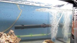 Download Clownfish Babies Day 7 Video