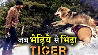 Download New Still: Salman Khan Fighting with a WOLF in TIGER ZINDA HAI Video