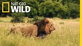 Download Savage Kingdom: Uprising - Trailer | Nat Geo WILD Video