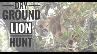 Download Arizona dry ground lion hunt with Seven Anchor Video