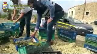 Download libération de chardonneret en espagne    jilguero libertad    Goldfinch Video