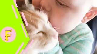 Download Baby and Cat Fun and Fails - Funny Baby Video Video