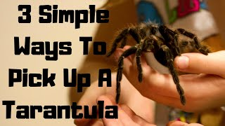 Download 3 Ways To Pick Up A Tarantula Video