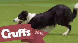 Download Heelwork to Music - Freestyle International Competition | Crufts 2015 Video