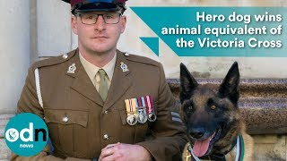 Download Hero dog wins animal equivalent of the Victoria Cross Video