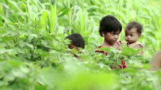 Download UNICEF BT Cotton - Documentary on Child Labour Video