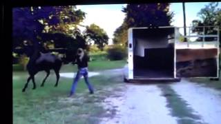 Download Female Horse Trainer Shows How To Abuse A Horse & How To Use A Whip Just For Direction Video