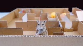 Download Como Construir Um Labirinto Criativo Para Rato - DIY Labyrinth for rat From Cardboard Video