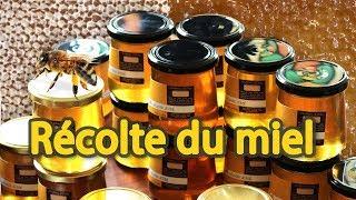 Download Récolte du miel, de l'extraction des ruches à la mise en pot Video