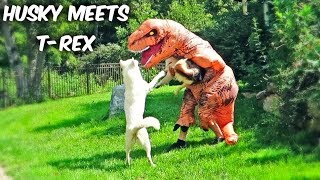 Download Funny Dogs Meet T-Rex! Video
