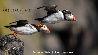 Download Wildlife Photography | Isle of May, Scotland - A Seabird Paradise Video