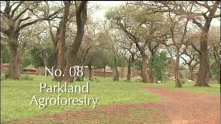 Download SLM 08 Parkland Agroforestry Video