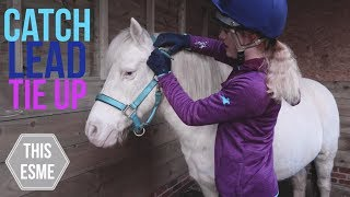 Download How to put on a Headcollar/Halter, Lead and Tie Up a Horse   Beginner Series   This Esme Video