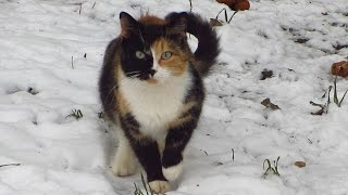 Download Calico cat and small bedroom for kitten with mother Video