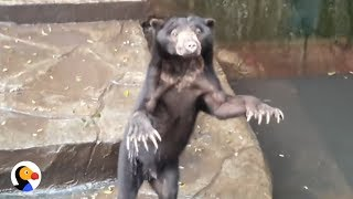 Download Animals Starving, Eat Plastic at Indonesian Zoos | The Dodo Video