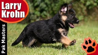 Download What I teach my puppies first / puppy training Video