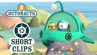Download Octonauts: Getting Stuck In A Rock Pool Video