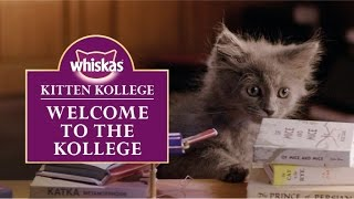 Download Ep.1 Welcome to the Kitten Kollege : Kitten Kollege Video