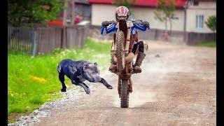 Download ANIMALS vs BIKERS - (ANIMALS ATTACKS MOTORCYCLIST) Vicious Big Dogs, Birds, Kangaroo hits! [Ep #04] Video