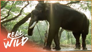 Download The Dark Side Of Elephants [Full Documentary] | Wild Things Video